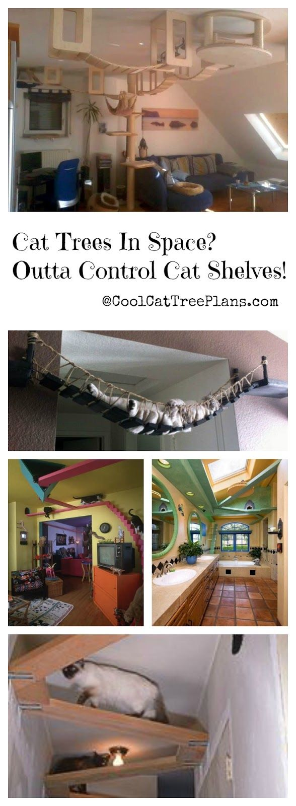 ♥ Cool Cat Stuff ♥ Build a cat gym on your celing with cat shelves. The cat ...